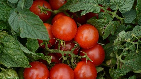 Hanging Tumbler Tomato Basket