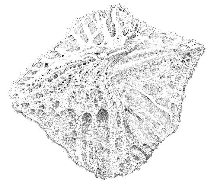 SEM Scale Image, 2018