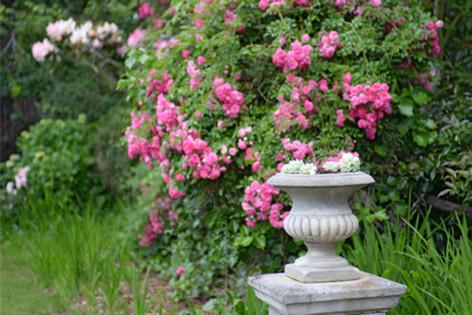 Cottage-style garden