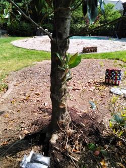 TREE USIING BLESS HURR SOIL