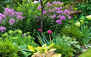 How to care for your garden and yard in every season