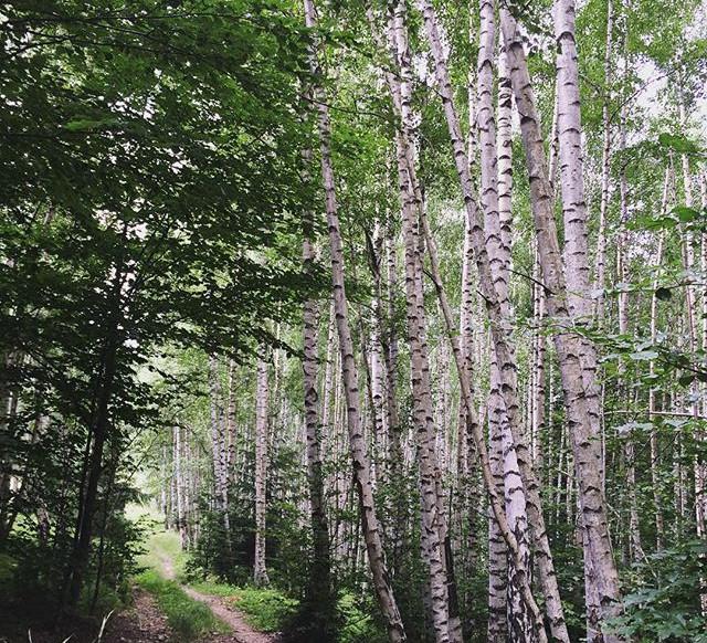 The White Forest of #legendelenemirei  #