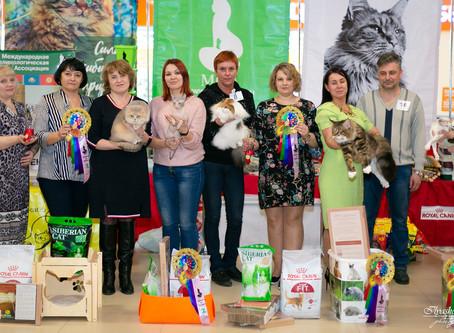 """Выставка кошек """"Райская птичка"""""""