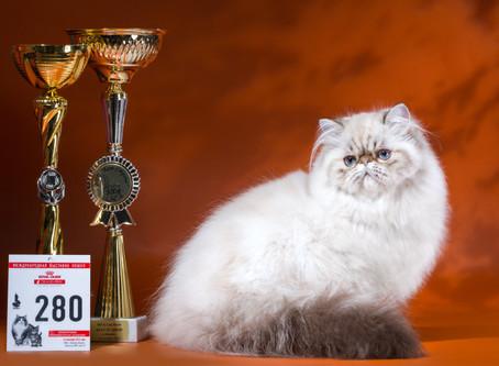 ГРАН-ПРИ ROYAL CANIN 2016 (Москва 3-4 декабря 2016)