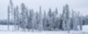Whitehorse-DL2_7813LRFB.png