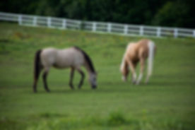 grass-animals-horse-9582.jpg