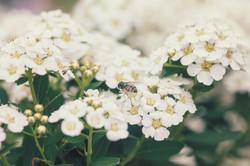 Inn Flowers