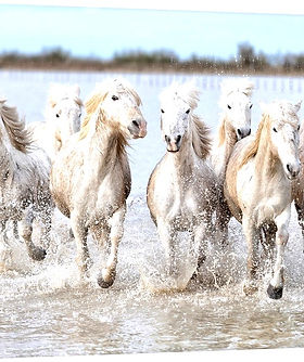 running-wild-horses%2C1157847_edited.jpg