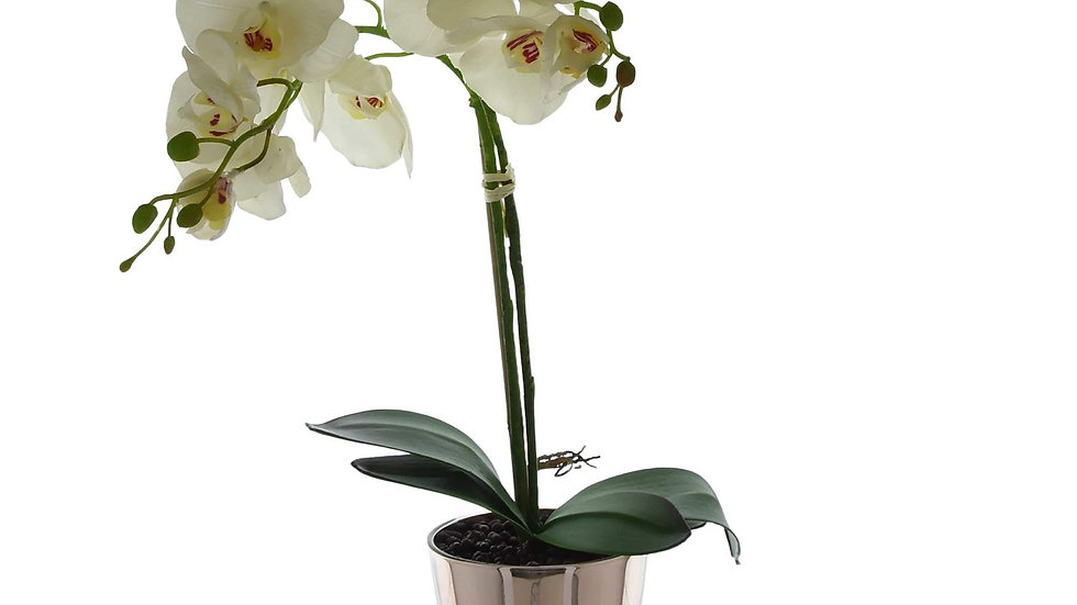 The Flower Patch Cream Orchid in Glass Pot 52cm