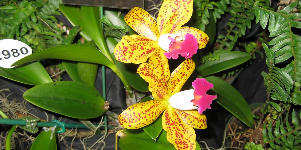 Tampa Bay Orchid Society Show