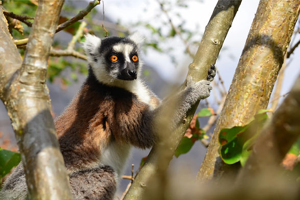 lemurien-seim.jpg