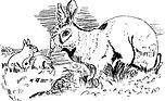 rabiit and bunnies.jpg