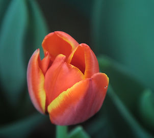 Floral tributes Shroshire