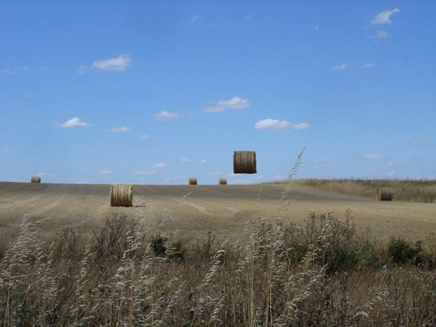 07campo de trigo con rollo.jpg