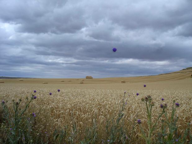 03campo de trigo con flores violeta.jpg