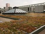 eco roof 003.JPG