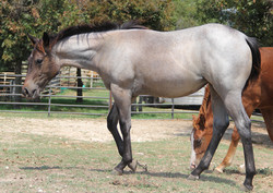 ~ 2018 Filly ~ SOLD ~