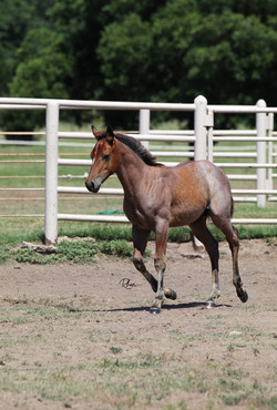2019 Lizzy Boon Colt