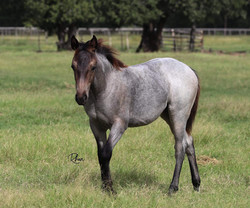 2019 Hasthags Filly