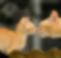 Introduce-a-kitten-to-your-cat.png