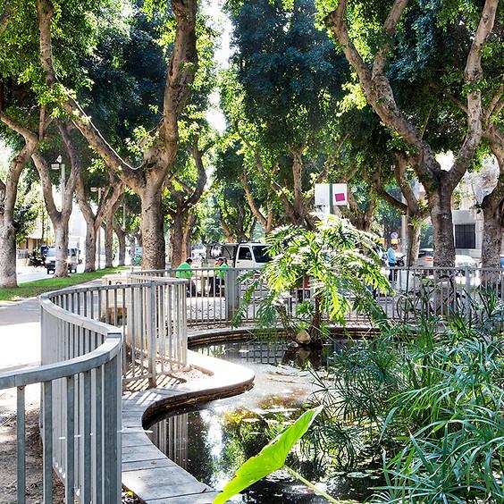 גינון עירוני: שימור עצים והמקרה של פיקוס השדרות – סדנה מעשית