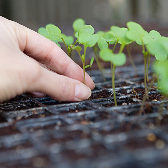 גינון עירוני: צמחים עונתיים וגינות אקולוגיות – סדנה מעשית
