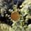 Thumbnail: North Star - Gold