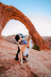 dog corona arch.jpg