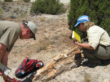 Archaeology or Paleontology