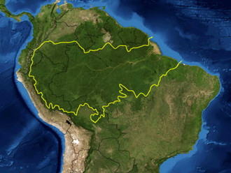 Waterbirds in the Amazon- where do they go?