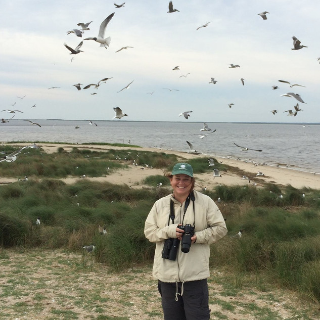 KSG south pelican island NC May 2016 (2)