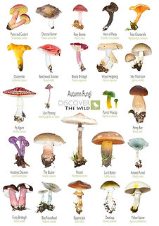 MushroomsDTWA3.jpg