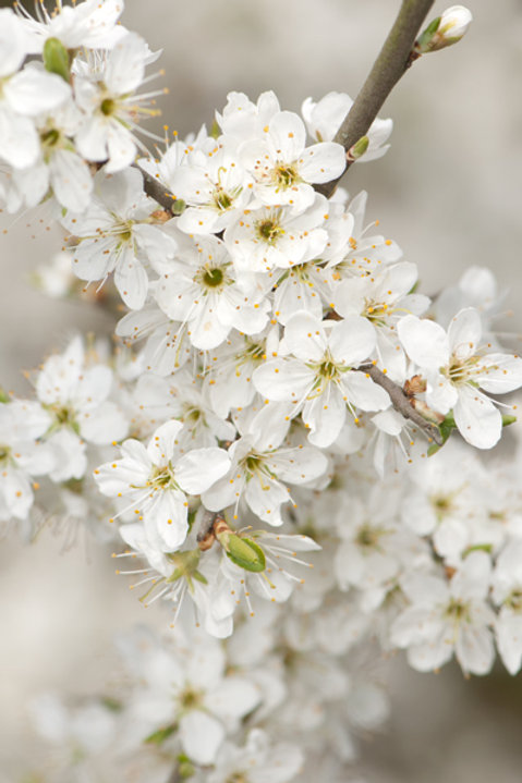 Spring Foraging (Flints)