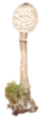 Parasol2web.jpg
