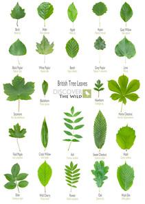 British Tree Leaves Sheet