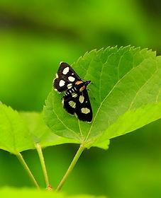 moth1adjsreb.jpg