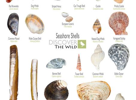 Seashore Shells