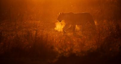 Trip Report: Kenya's Masai Mara