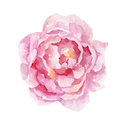 flower%20peonie%20website_edited.png