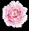 flower%20peonie%20website_edited.png