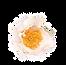 flower%202%20website_edited.png