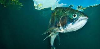 Gone Phishing--Don't Bite the Hook!