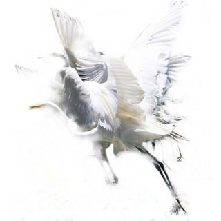 Second Place-Cranes