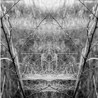 Field of Webs and Dreams