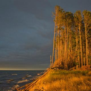 Trees Along Lake Superior