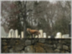 pic-red-fox-greens-farms-cemetery-hillan