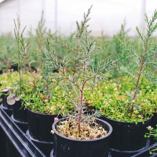 One Tree Planted-46.jpg