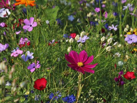 I giardini terapeutici. Una realtà oramai irrinunciabile