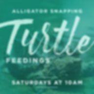 TurtleFeedings.png