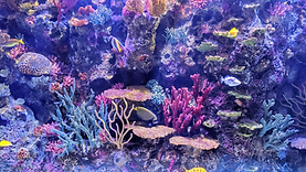 coral background.png